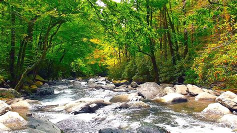 Beautiful Nature Background by River Forest Sounds Beautiful Nature Background