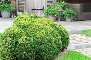 Die Schönsten Steingärten : b ume f r steingarten eine auswahl der sch nsten sorten ~ Bigdaddyawards.com Haus und Dekorationen