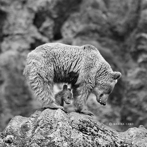 wildlife photography  marina cano incredible snaps