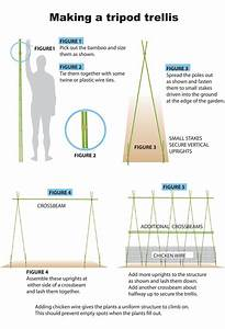 Tripod Bamboo Trellis For Pole Beans