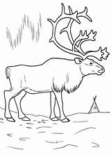 Arctic Coloring Pages sketch template