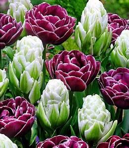 Tulpen Im Garten : tulpen mix spring flash 8 zwiebeln g nstig online kaufen ~ A.2002-acura-tl-radio.info Haus und Dekorationen