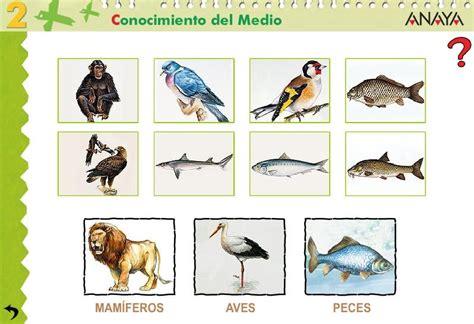 primer ciclo carreteria mamiferos aves  peces