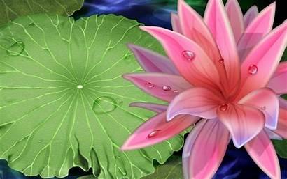 Lotus Flower Wallpapers Pink Desktop Background Lily