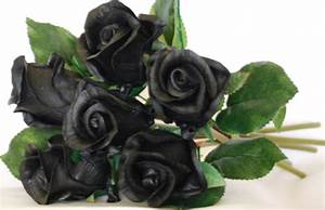 Pics For > Real Black Roses Pictures