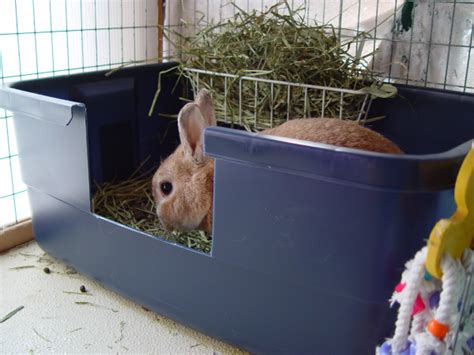searching for happy endings 187 rabbit litter box recommendations