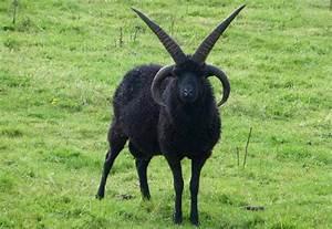Satan Goat Ov Hell - quickmeme
