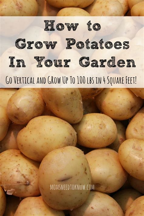 how to grow potatoes how to grow potatoes go vertical for the best yield moms need to know