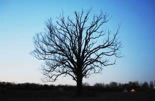 Real Tree without Leaves