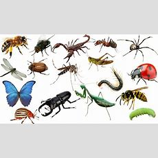 Learning Insects And Bugs For Kids Animals Names In English Funny Learning Videos For Kids
