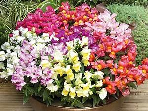 Welche Blumen Blühen Im Oktober : blumen f r balkon ~ Bigdaddyawards.com Haus und Dekorationen