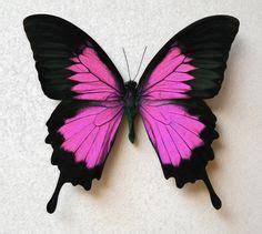 butterfly tattoo extension  tattoos pinterest
