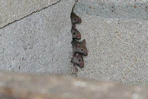 Comment Se Débarrasser Des Souris Dans Une Maison : comment se d barrasser des souris dans une maison par vous m me ~ Nature-et-papiers.com Idées de Décoration