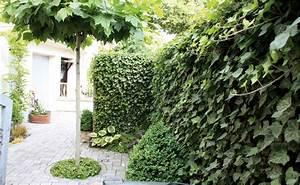 Sträucher Für Garten : sichtschutz f r garten und terrasse tipps von hornbach ~ Buech-reservation.com Haus und Dekorationen
