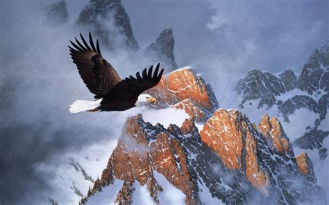 bald eagle wallpapers  images