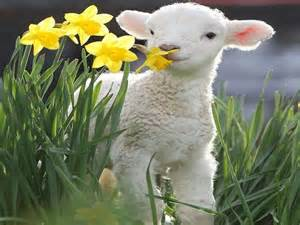 Lamb and Spring Flowers