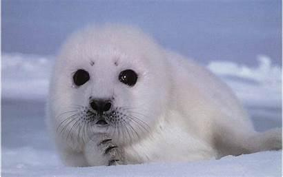 Seal Iphone