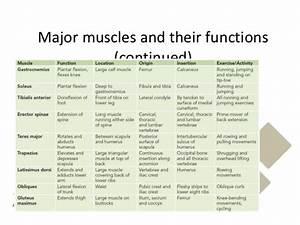 Skeletal System Muscles  Pearson