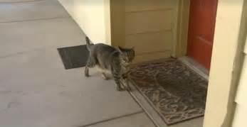 cat begging     women realizes