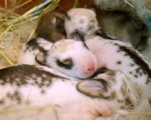 First White Baby Bunnies Eyes Open When