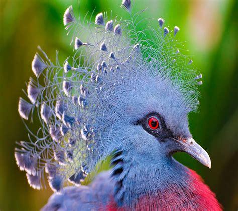 tropical parrot wallpaper wallpapersafari