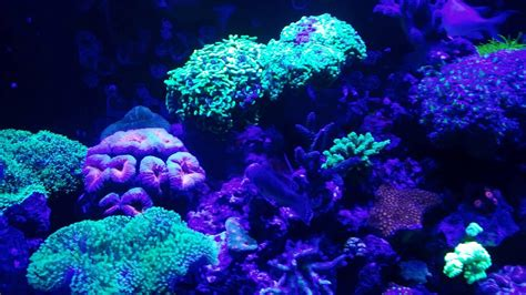 sea reef aquarium coral reef aquarium fish aquarium design ideas