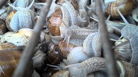reportage sur les escargots 15 minutes