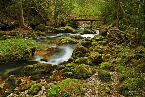 Forest Scene With Bridge by Burtn on DeviantArt