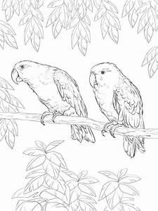 Papagei, Ausmalbilder, F, U00fcr, Erwachsene, Kostenlos, Zum