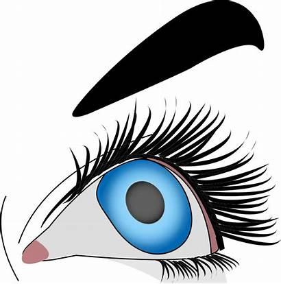 Makeup Clipart Eye Oeil Female Svg Clip