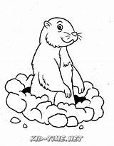 Gopher Coloring Pages Animals Printable Visit Fun Printables sketch template
