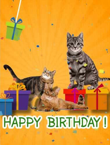 happy birthday  cats   kids ecards greeting