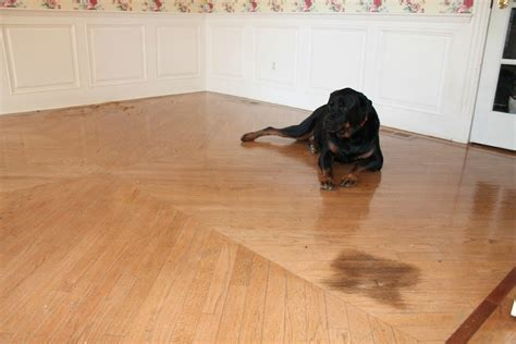 How To Remove A Pet Stain From Hardwood Floors Average Cost Of Carpet Vs Hardwood Mohawk Wear Dated Nylon Reviews Cleaning Vancouver Wa Special Crc Knife Xti Best Companies In Appleton Wi Grammy Award Red Photos 2018 Garage Dilworth Minnesota Furniture Marks On