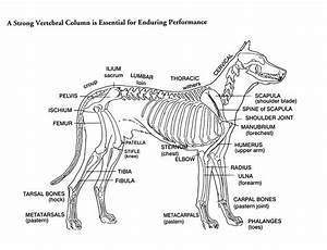 Parts Of A Dog