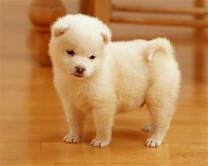 HD WALLPAPERS: Cute puppies wallpapers