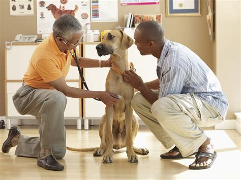 Heart Disease In  Ee  Dogs Ee   Signs Diagnosis And Treatment