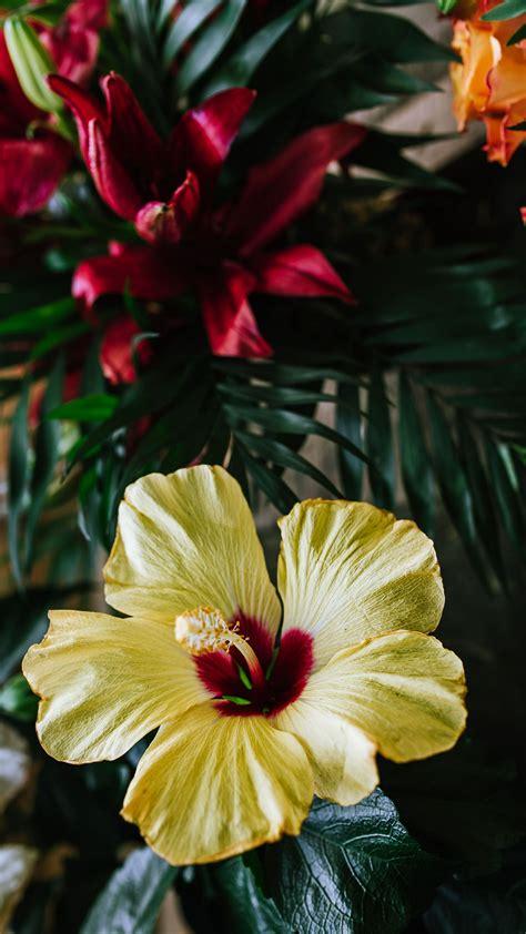 Download Wallpaper 2160x3840 Hibiscus Flower Yellow