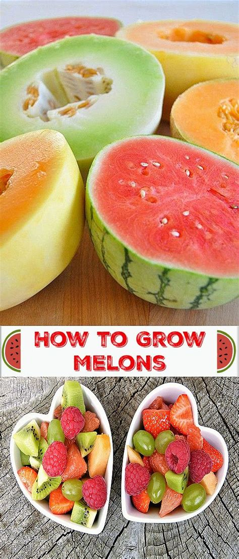 how to grow cantaloupe 2171 best images about garden ideas ii on pinterest gardens raised beds and raised bed gardens