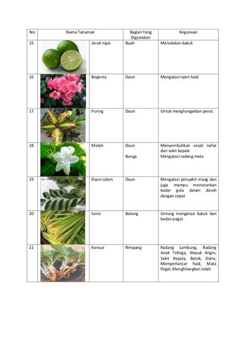 tanaman apotik hidup