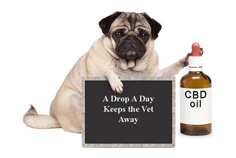 benefits  cbd oil  dogs
