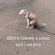 pooping  public gifs tenor