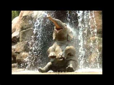 lustige tierwelt einfach zum schmunzeln  tierbilder von