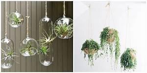 Plantes à Suspendre : boule verre pour plante ~ Premium-room.com Idées de Décoration