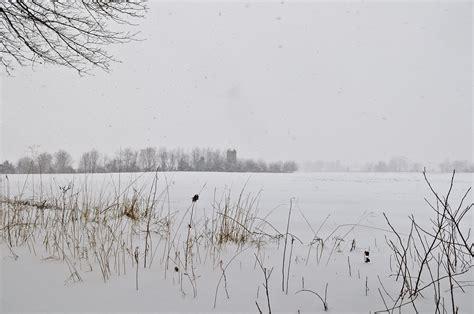 winter white  louis dallara photography