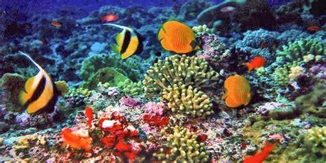 indonesia surga terumbu karang dunia good news