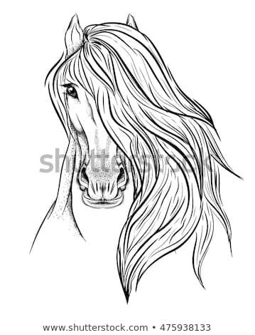 Detailed hand drawn muzzle of horse.Sketch for tattoo