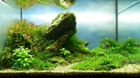 Aquascaping Tank by Andreas Ruppert And Aquascaping Aqua Rebell