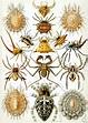 Arachnid - Wikipedia