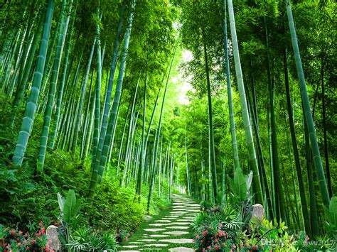 photo bamboo forest scenery liveing room window