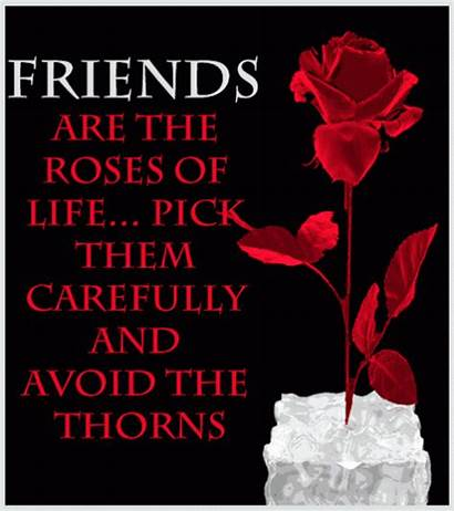 Friends Roses Friendship Quotes Friend Animated Happy